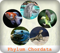 https://sites.google.com/a/srk.ac.th/biologysrk/phylum-chordata